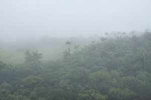 Fog envelopes the forest at the summit of Nahnalaud