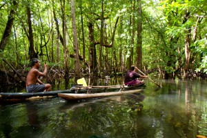 A local canoe in a mangrove passage in western Kitti, Pohnpei, Federated States of Micronesia