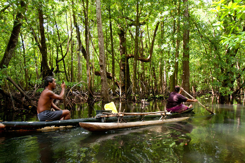 Traditional canoe in the mangroves, Pohnpei, Federated States of Micronesia (FSM)
